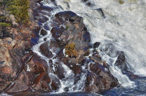 tree waterfall survive