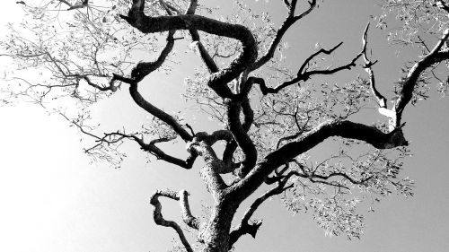 tree filigree black and white