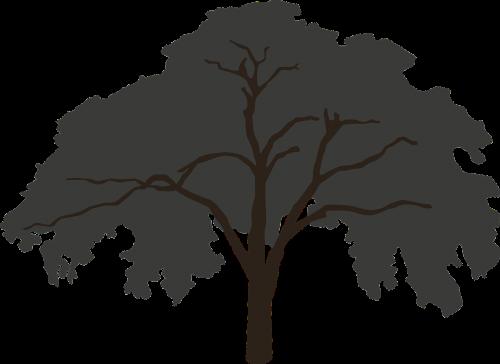 tree silhouette big