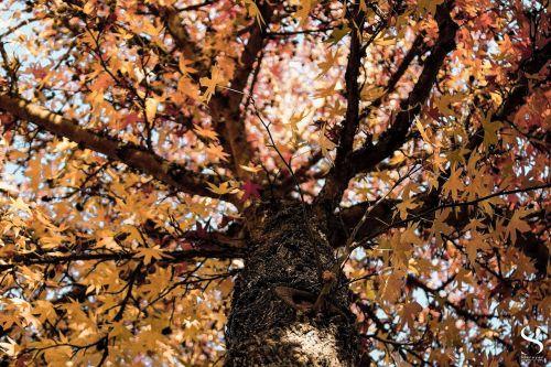 tree winter branch