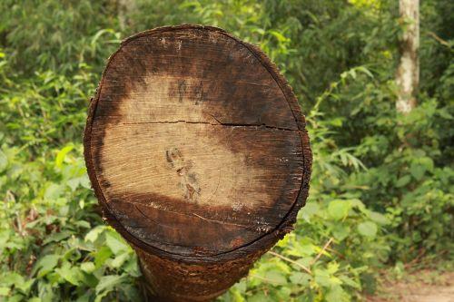 tree tree log logging