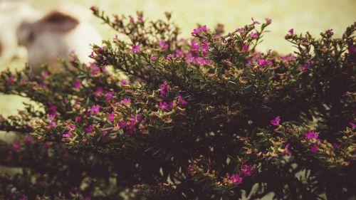 tree bush flowers