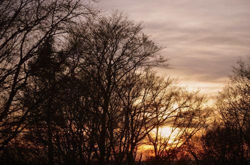tree abendstimmung sky