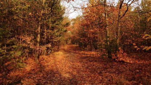 tree autumn foliage