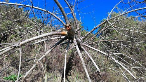 tree trunk tree trunk