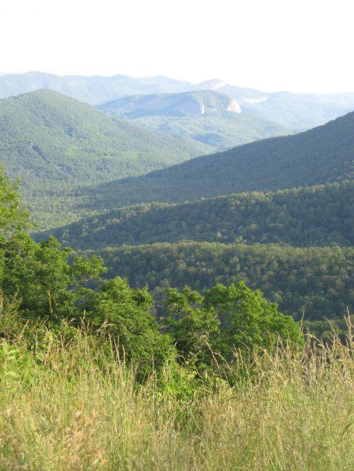 tree mountain nature
