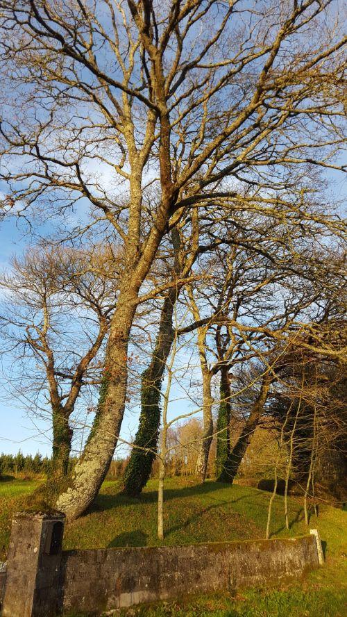tree galicia winter
