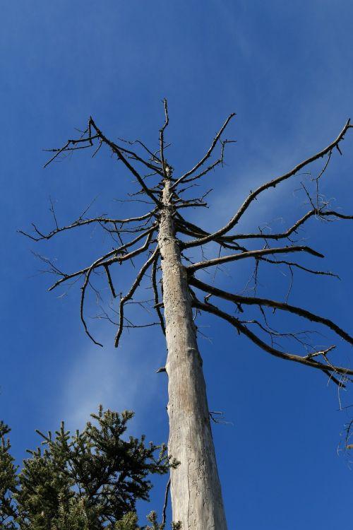 tree dead sky