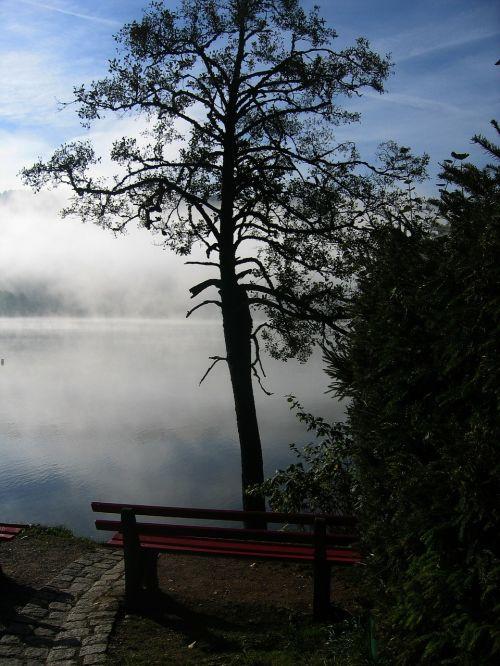 tree bank seat