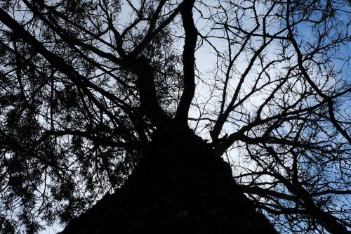tree branches upshot