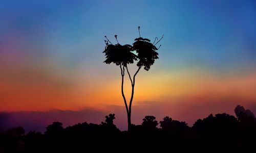 tree lone ranger blue red