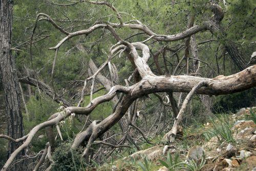 tree old dead