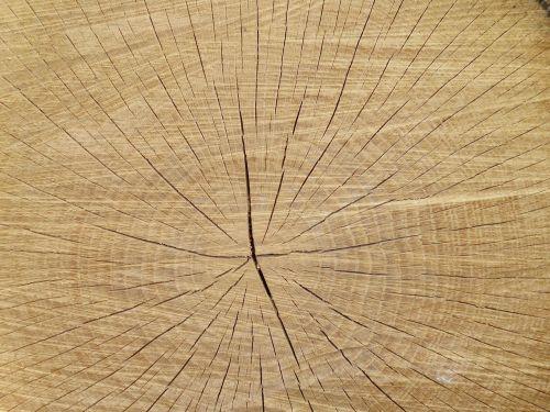 tree slice texture