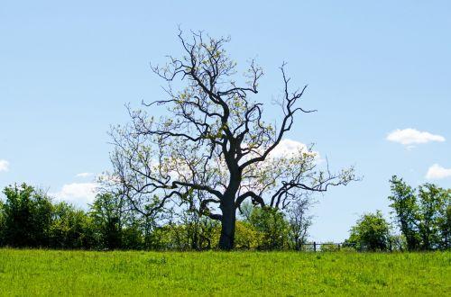 medis, medžiai, filialas, filialai, parkas, atsipalaidavimas, sezonas, pavasaris, vasara, saulėtas, saulės šviesa, žydi, žolė, veja, žalias, lapija, grožis, niekas, gamta, peizažas, fonas, tapetai, medis