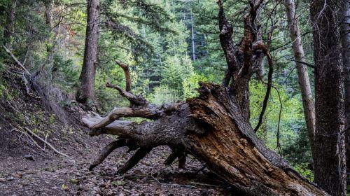 tree roots summer