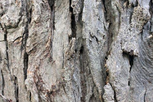 tree old bark