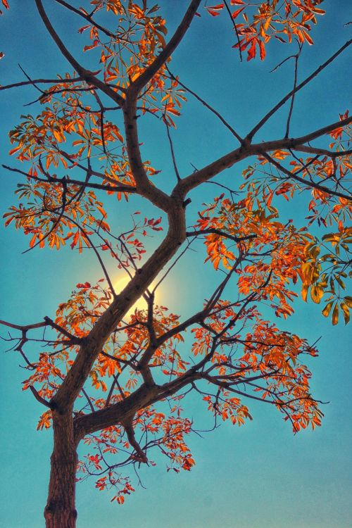 tree autumn south africa