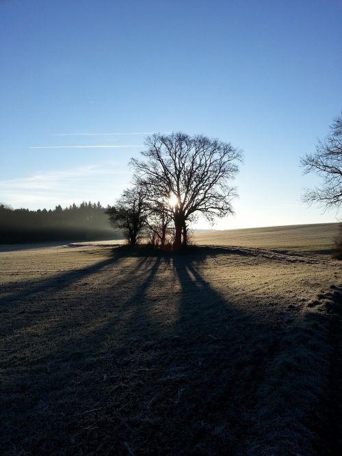 tree life light