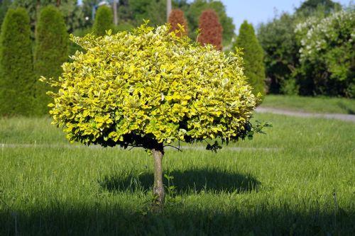 tree small tree lone tree