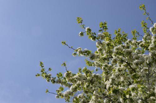 tree bloom flowers