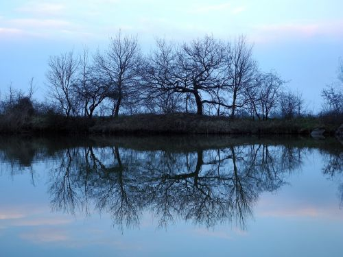 tree reflection water