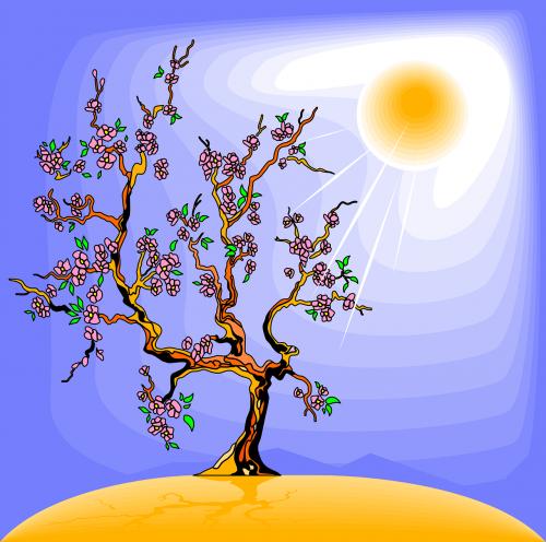 tree sunlight sun