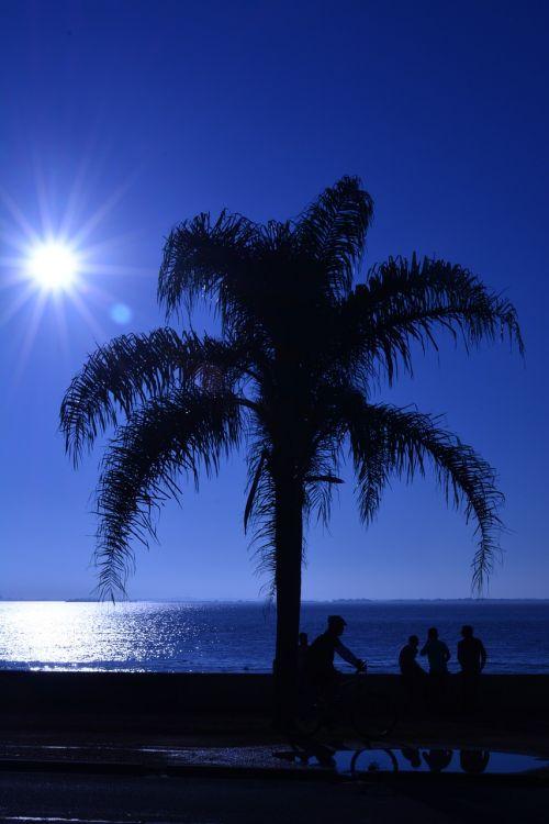 medis,dangus,prieš šviesą,saulės šviesa,gražus,gamta,siluetas,saulėlydis,sol,atpalaiduojantis,rio,vandens jūra,šviesa,atspindys,mėnulio kelias