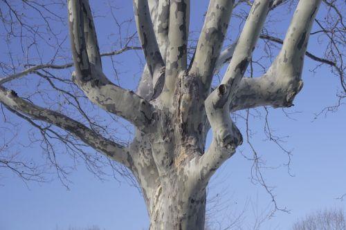 tree sky winter