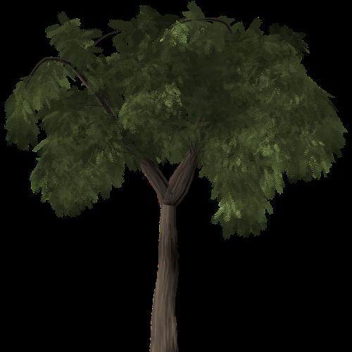 tree pepper tree peppertree