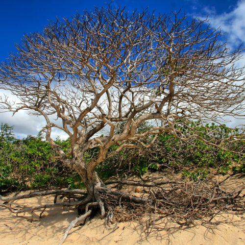 tree branch tree branch