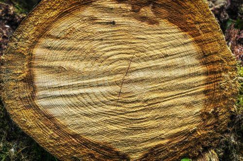 tree wood rings
