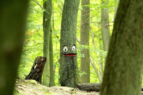 tree face log