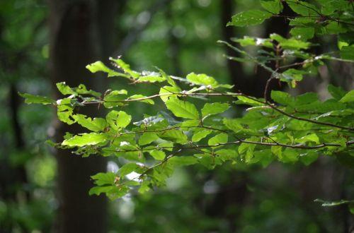 tree foliage light
