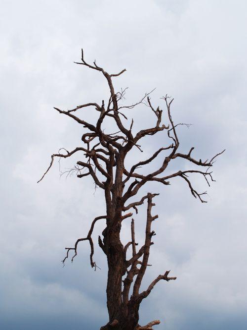 tree dead branch