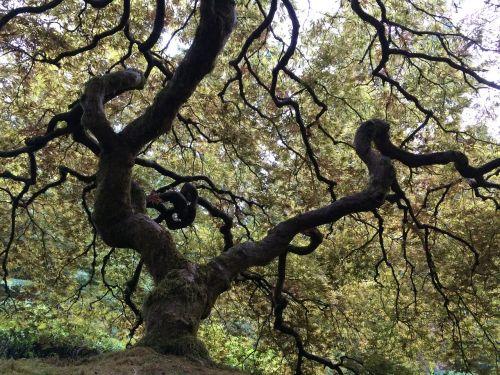 medis,bagažinė,gamta