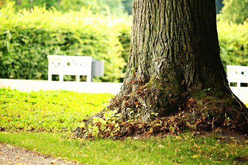 tree park bank