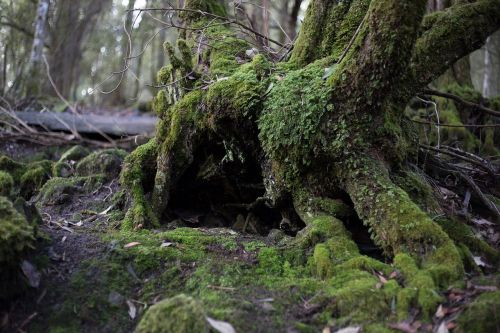 tree forest moss