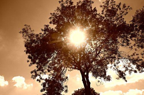 tree tree top sky