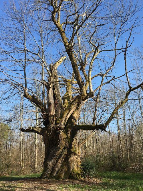tree millennium forest
