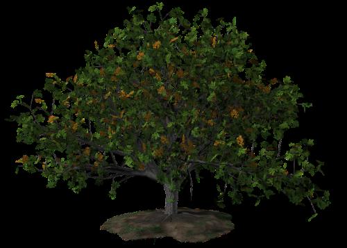tree summer nature