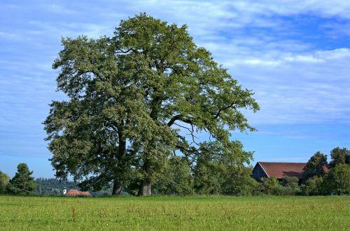 tree individually nature