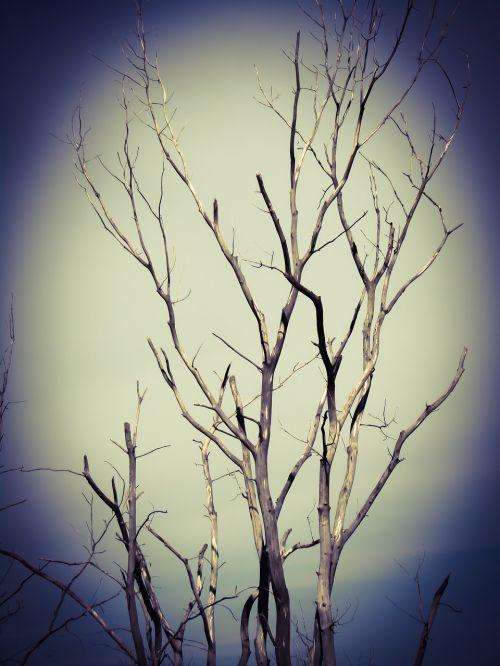 tree scary dark