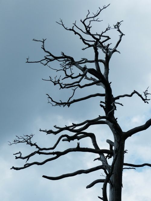 tree old waldsterben