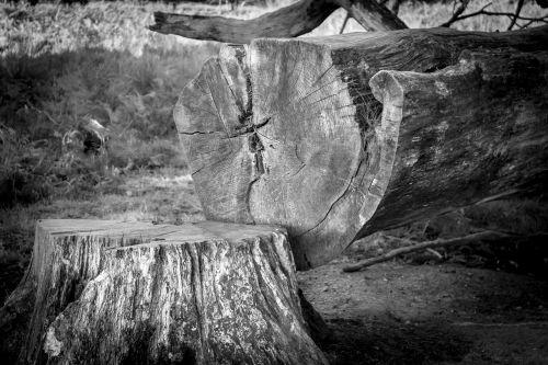 tree tree stump log