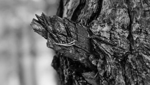 tree bark depth of sharpness