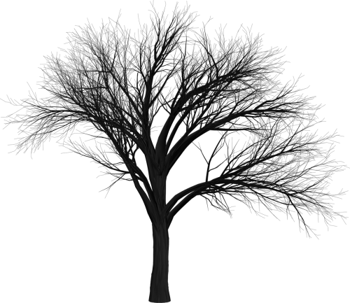 tree branch empty