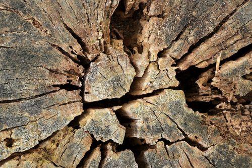 tree tree stump nature