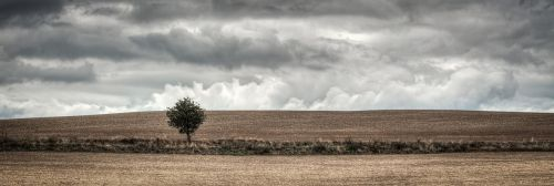 tree field heaven