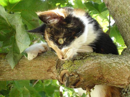 chaton animal domestique