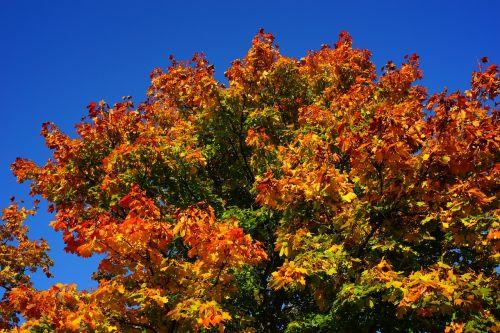 tree late summer autumn
